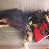 A dog's life #dog #viralata #cachorro #saopaulo #copan