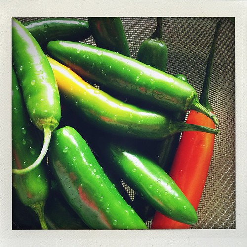 Making homemade hot sauce with garden peppers