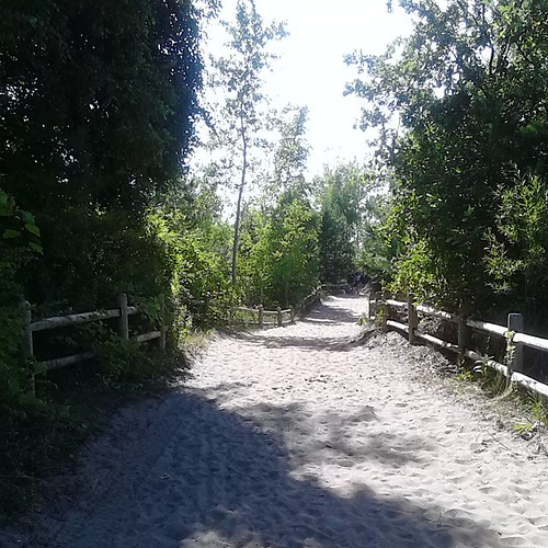 Walking down the path  #toronto #Torontophotos #torontoislands #hanlanspoint #beaches #dunes