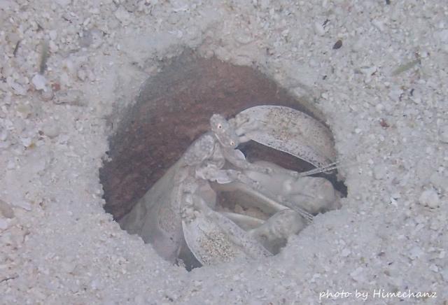 巨大トラフシャコ!穴の大きさが大体10cmくらいです!