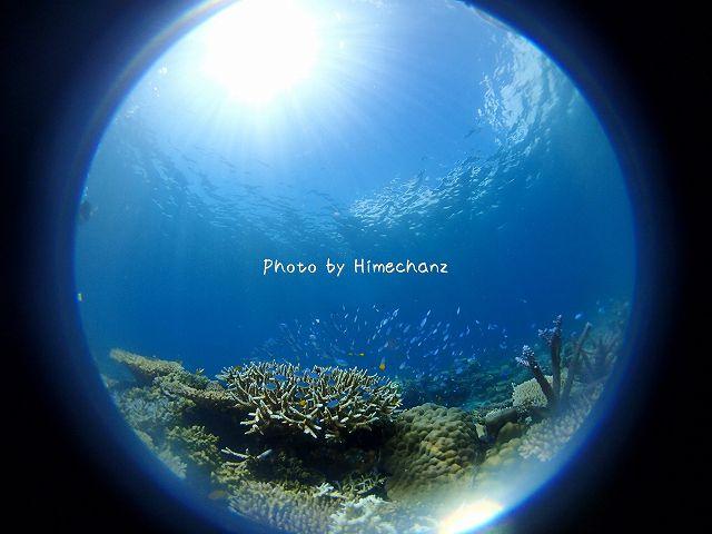 サンゴもデバスズメダイも綺麗でした!