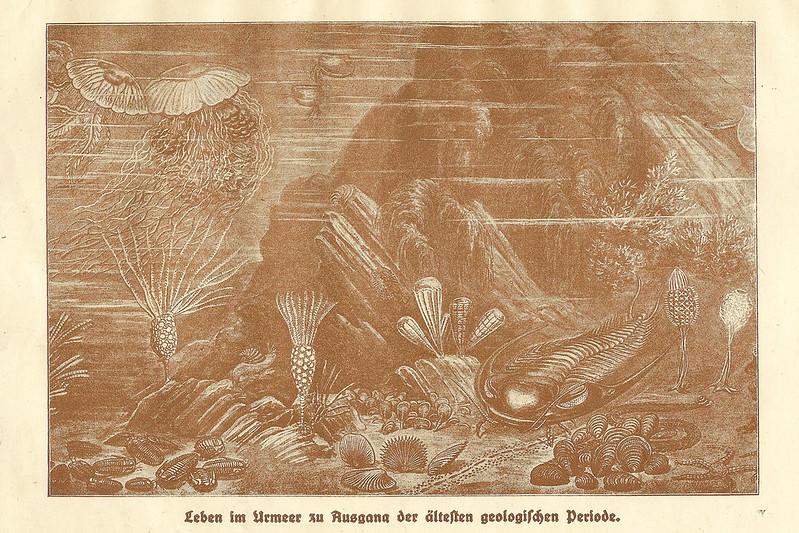 Biologie Zoologie Urmeer geologische Periode Panzerfisch Meer des zweiten Zeitalters Zeichnung Muscheln Schnecken Seeigel Antiquariat Himmel Erde Mensch 1922 Brigitte Stolle
