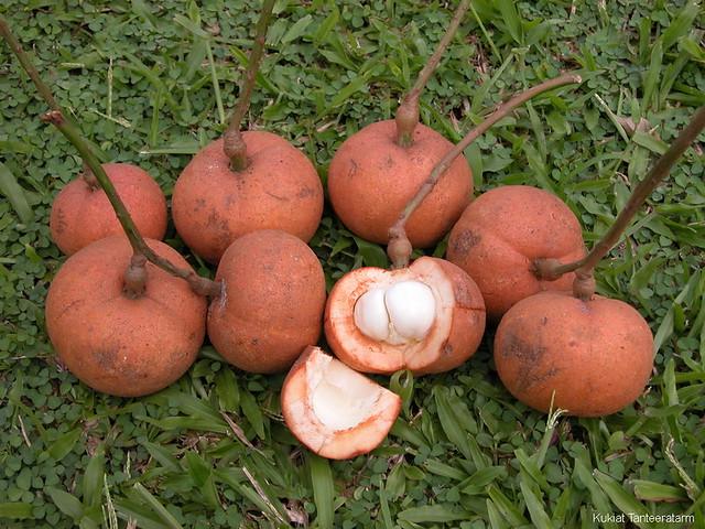 Baccaurea macrocarpa