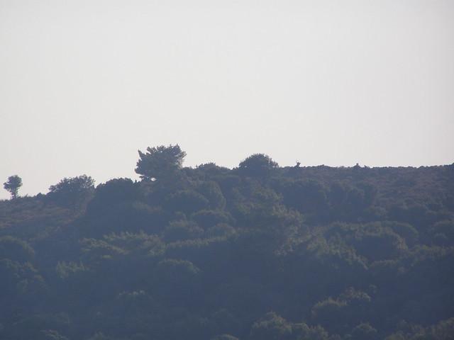 Καπνός πάνω από την Ψίνθο, ερχόμενος από την πυρκαγιά που ξέσπασε στη περιοχή του Άγιου Σουλά της Ρόδου.
