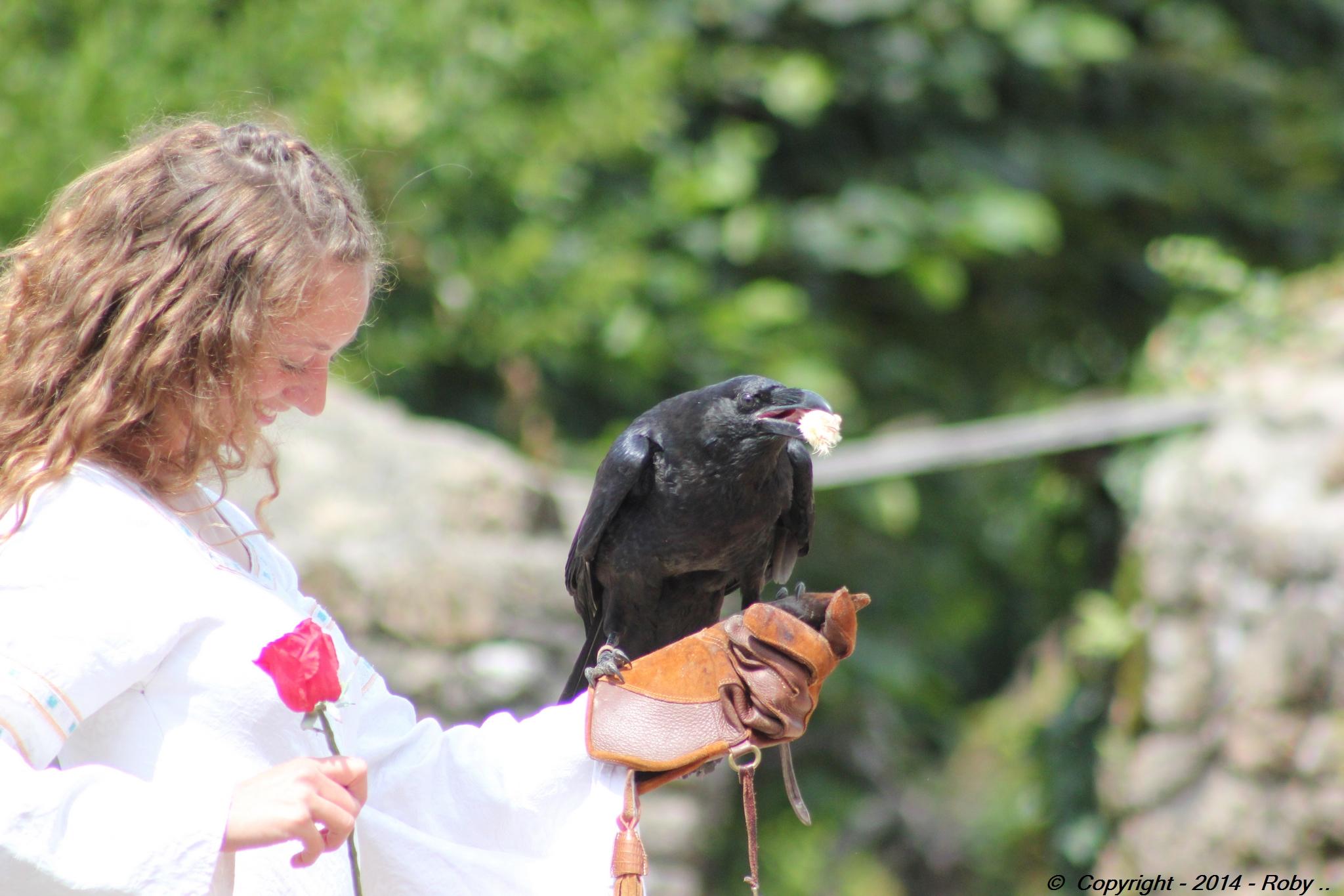 la belle et le corbeau -puit du fou (315)