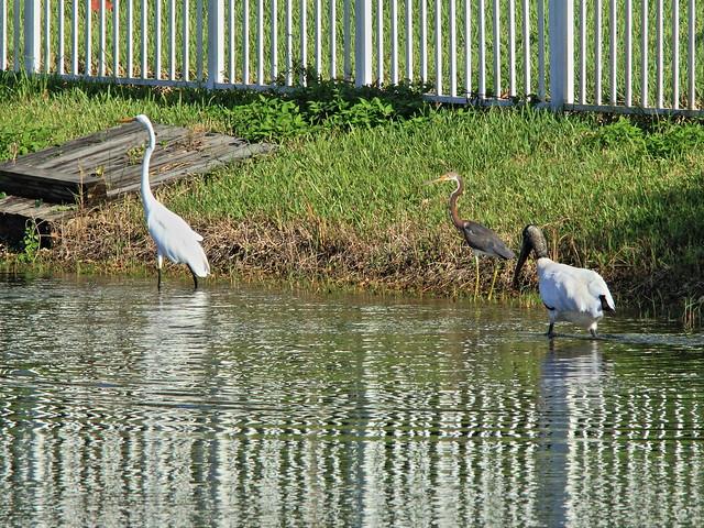 Stork and herons relocate 3-20140912