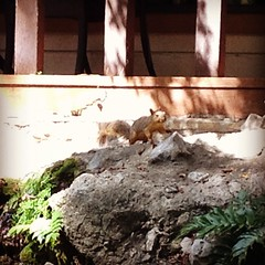Our squirrel friend. #creekhaveninn #wimberley
