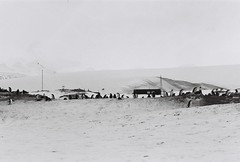 Antarctica Lost Film (8)