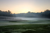 Fairway in the Mist