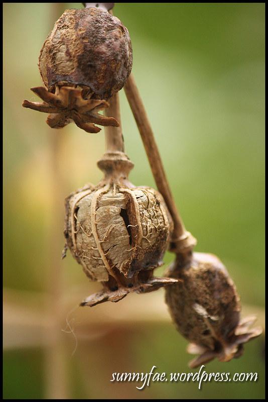 3 Hanging Pods