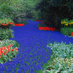 Holland_Keukenhof_April