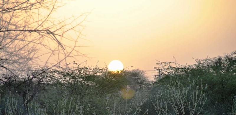 273 Camel safari a Jaisalmer (95)