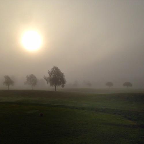 trees mist fog sunrise landscape sweden öringe tyresögk