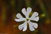 spring flower زهور الربيع