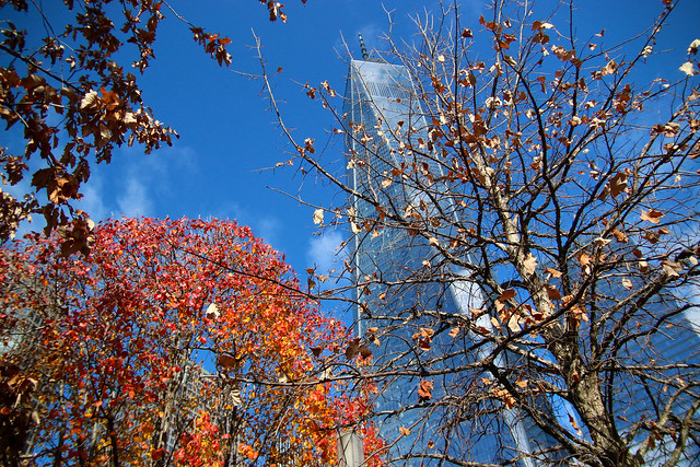 Survivors Tree and One World Trade Center