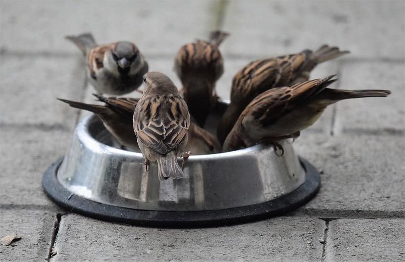 Sparrows16.12 (13)