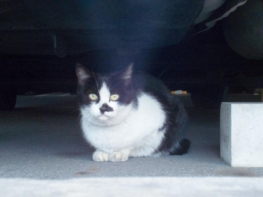 Stray cat f/11
