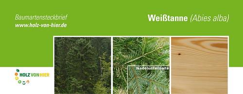 Weißtanne-Header