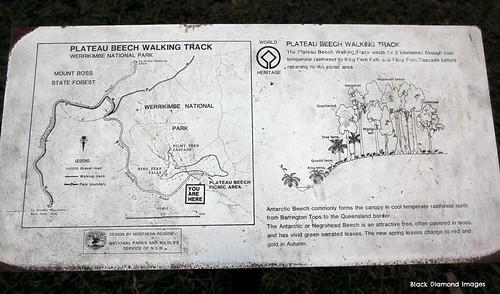 Plateau Beech Walking Track Map, Werrikimbe National Park, Wauchope, NSW