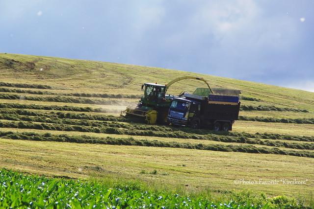 牧草刈り3