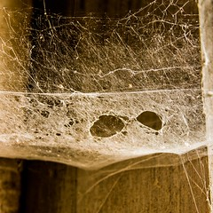 Spider web eyes