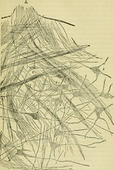"""Image from page 576 of """"The brain as an organ of mind"""" (1896)"""