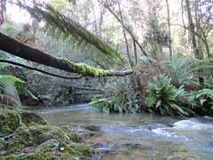 2014-08-10 Lilydale Falls 111 - Branch over Second River