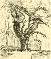 "Image from page 125 of ""Essex naturalist: being the journal of the Essex Field Club"" (1887)"