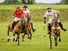 Any one for Polo?