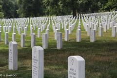 cemetery, headstone, memorial, grave,