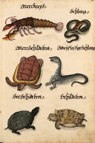 012-Aquarelle von Säugetieren…- e-manuscripta-Bibliothèque électronique suisse