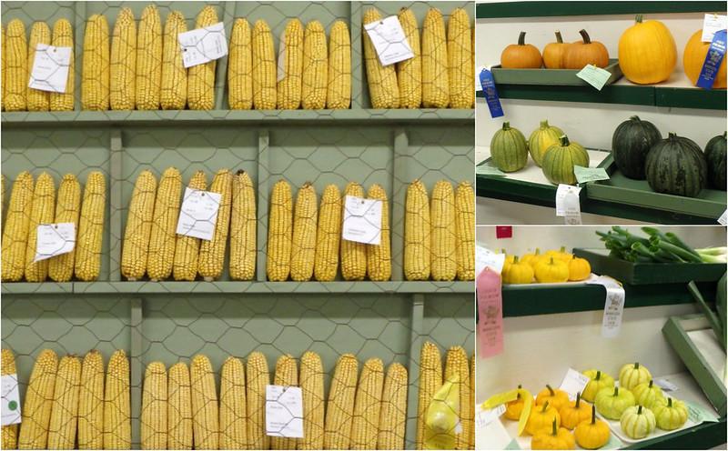 corncobs and mini pumpkins