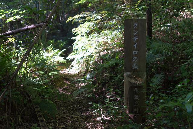 御蔵島 タンテイロの森