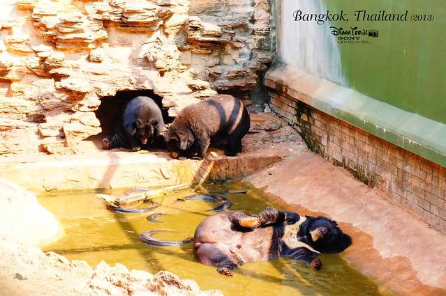 Kanchanaburi Tiger Temple 13