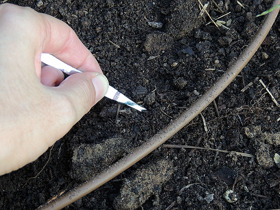 using-tweezers-in-the-garden-1