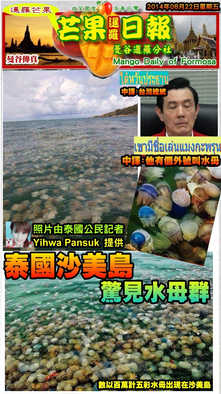 140822芒果日報--泰國新聞--沙美島水母滿佈,數量驚人達百萬