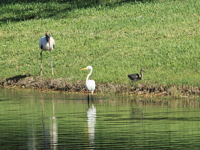 Stork and herons 20140912