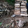 woodpile in the morning