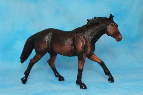 Walkaround of the Mojo Fun Sooty Bay Quarter Horse Stallion 15076718378_03d0bf9530