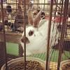 Adorable rabbit at the fair last night. #oregonstatefair #oregonstatefair2014 #rabbit #bunny