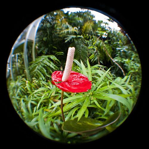 park red flower macro green gardens swansea wales botanical photography flora nikon south documentary fisheye af 020 singleton opteka d3000