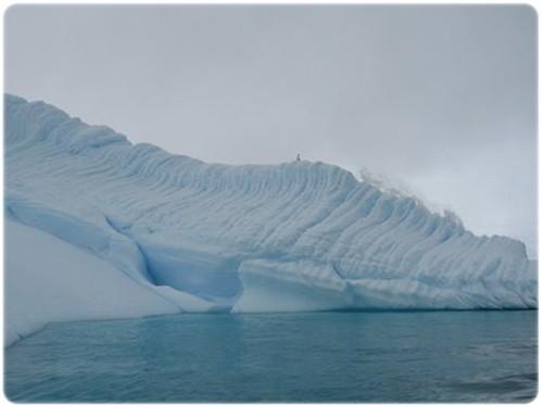 Melchior Islands (1)