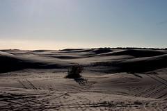 Atlantic dunes