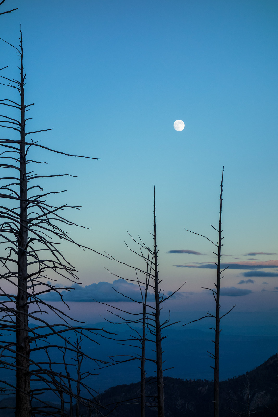 1409 Moon and Trees from the Aspen Trail