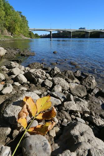 Autumn Soon Arrives in Edmonton (SOTC 118/365)