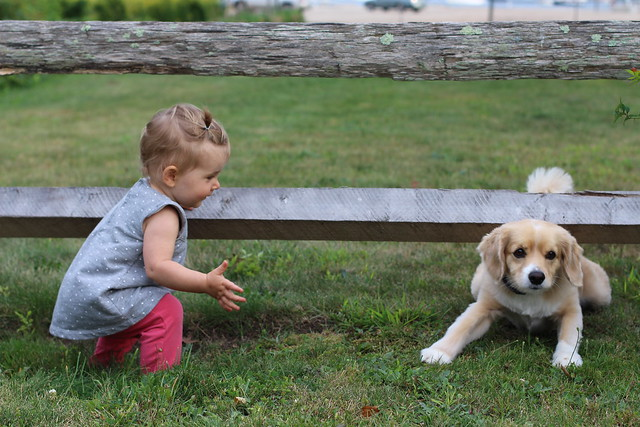 Baby meets Dog