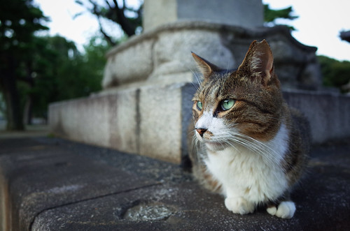 Cat in Gokokuji