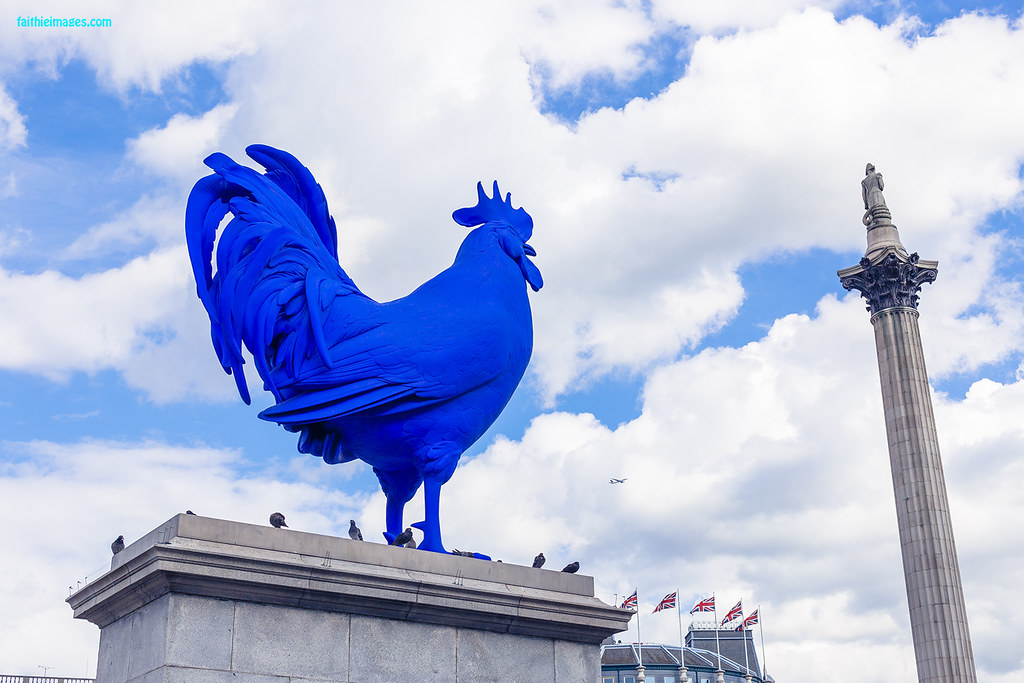Blue rooster in London