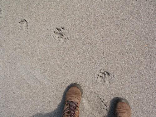 Dunnet Beach 2014 (4)