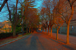 sunlit avenue in montalto | by Steve Slater (used to be Wildlife Encounters)